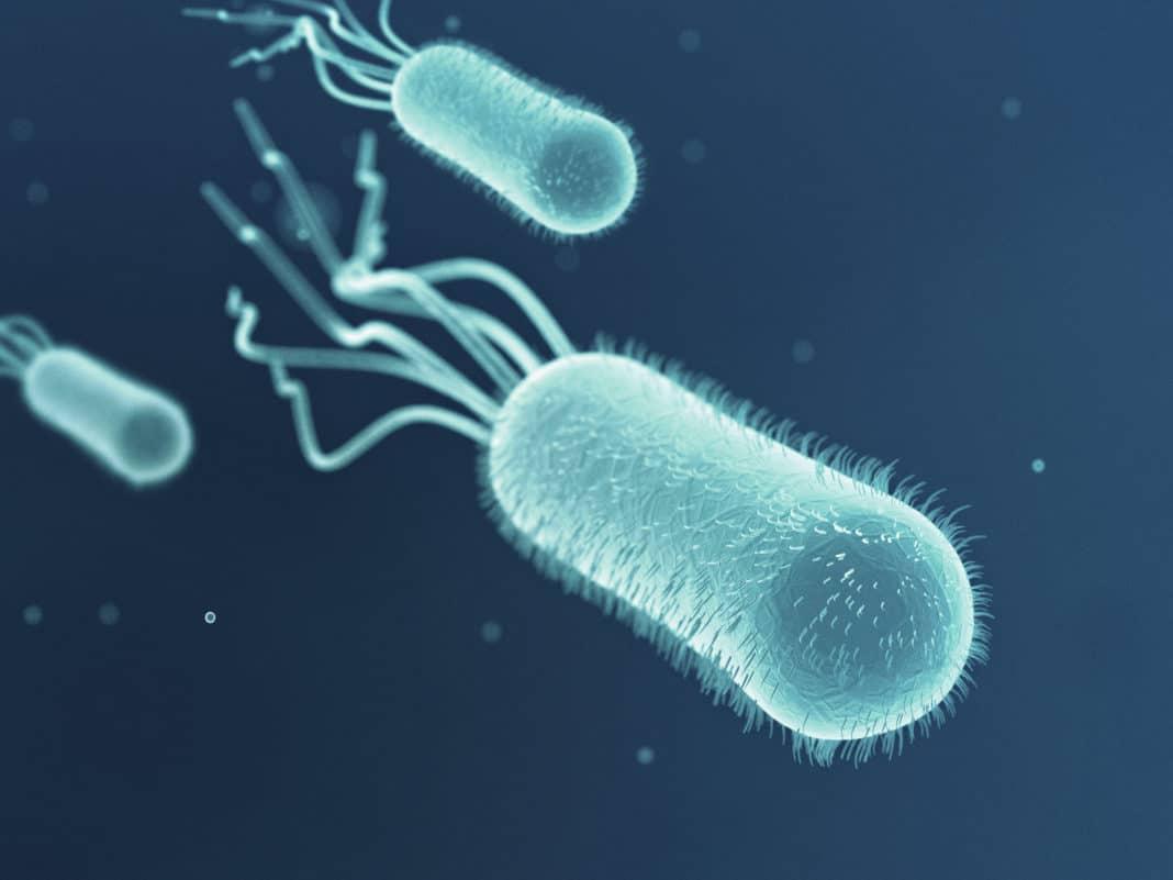 Обнаружен провокатор развития рака кишечника - бактерия Escherichia coli