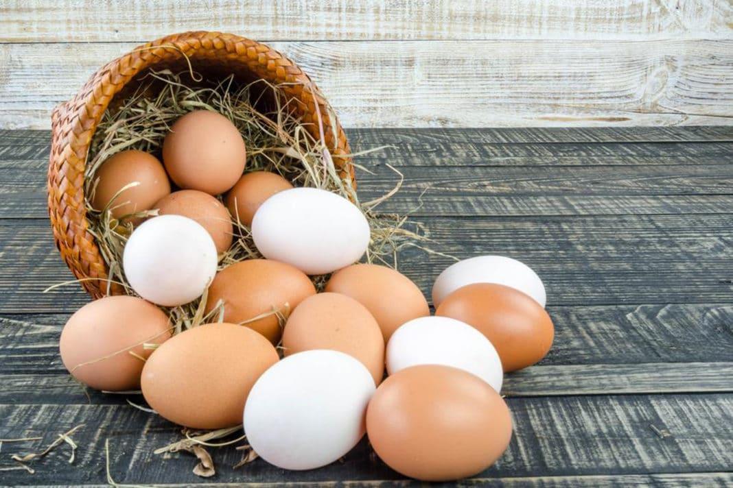 Новое лекарство от рака – обычные куриные яйца необычных кур