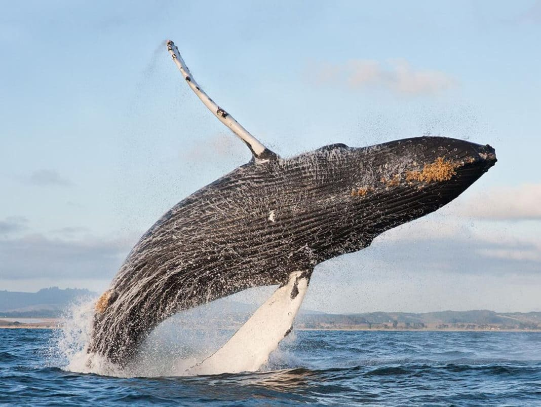 Почему киты не болеют раком?