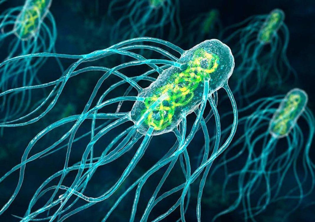 Какие бактерии «говорят» о раке простаты